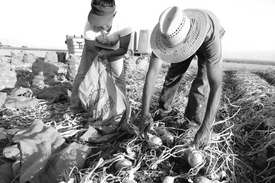 Labor sin fruto