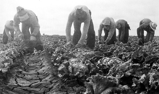 Today in labor history: 1934 Filipino lettuce cutters strike