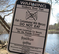 Mercury contaminates fish nationwide, study shows