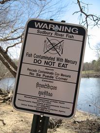 Mercury contaminates fish nationwide, study shows