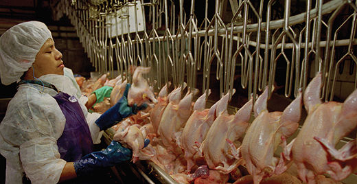 Arkansas poultry workers see wages plucked