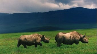 Of rhinos and candidates