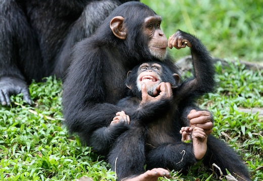 Ape personhood is step in right direction