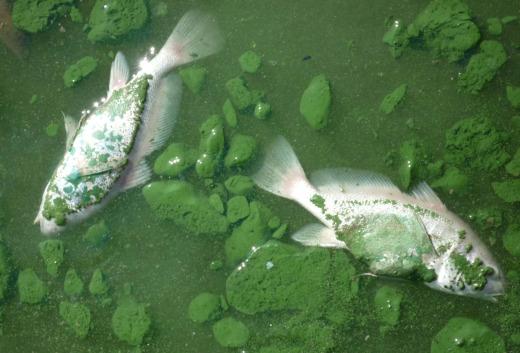 Corporate agribusiness threatens Ohio's lakes