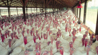 Poultry companies on trial in film and courtroom