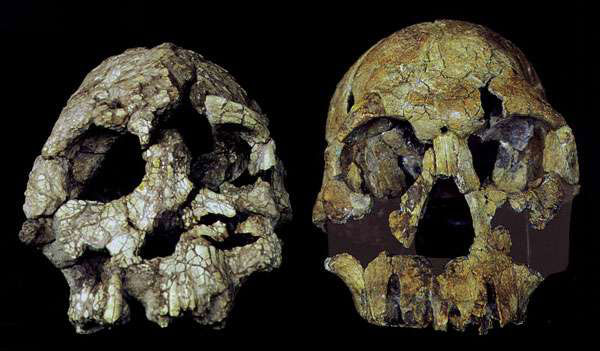 The importance of being Ardi: An emerging picture of human origins
