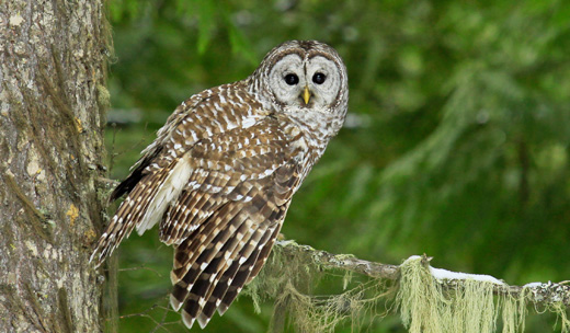 Reader's voice: Stop killing owls!