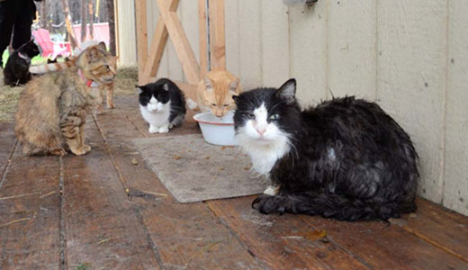 Cat rescuers hold Caboodle Ranch owner accountable (with video)