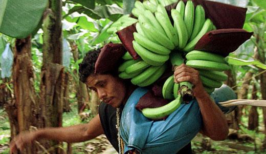 Chiquita loses legal battle to keep documents secret