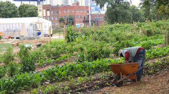 Hymn to the Community Garden