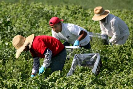 San Diego: land of day laborers, farm workers and guest workers