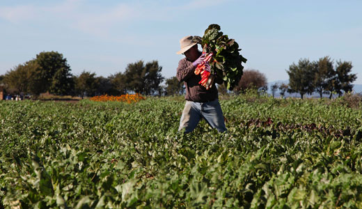 Union and growers split on immigration plan