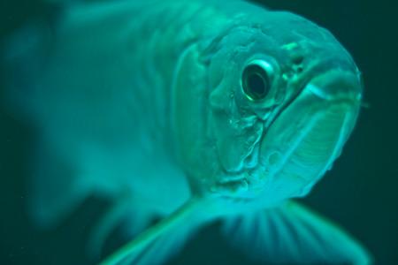 Fish gotta swim and George Will gotta lie