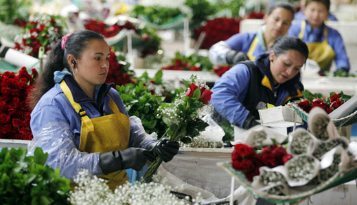 Flower workers: giving Valentine's Day new meaning