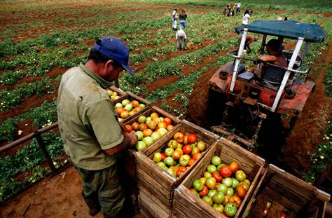 Cuba's cooperative farms break new ground in production