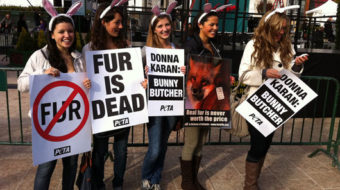 West Hollywood becomes first U.S. city to ban sale of fur