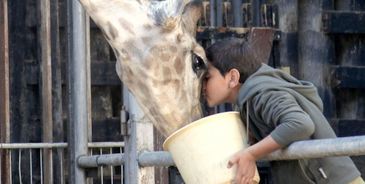 Films depict Palestinians' tragedy, humanity