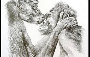 Judge recognizes personhood of chimpanzee plaintiff