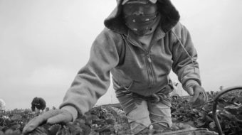 Indigenous migrants demand change in the fields