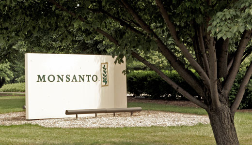 Judge scraps farmers' case against Monsanto