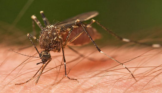 West Nile virus worsening with climate change