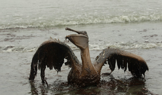 Environment watchdogs demand long suspension for BP