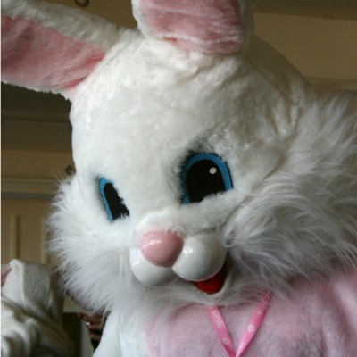 Look for the Union Bunny