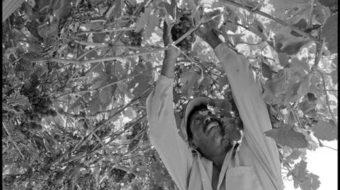 Grapes of Wrath: California farmworkers fight to unionize