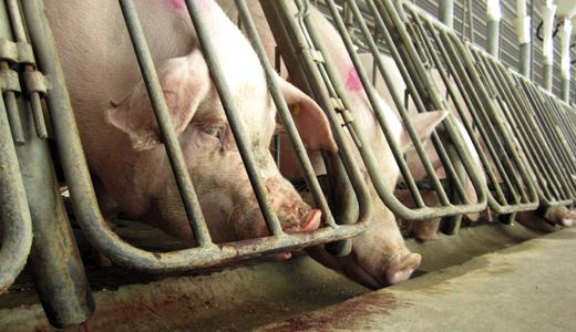 "Animal rights activists fighting ""Ag-Gag"" laws"