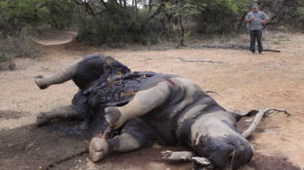 Rhino killings on the rise in South Africa