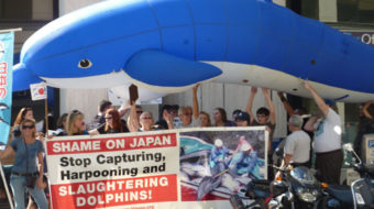 Dolphin slaughter stirs up wave of outrage