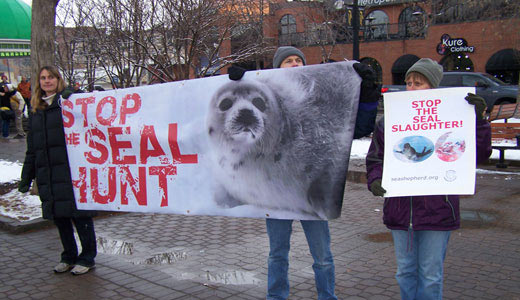 Chinese activists don't want Canada's ill-begotten seal products