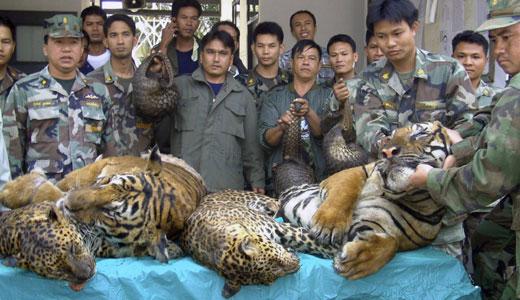 Thai house raid reveals ongoing attacks on wildlife