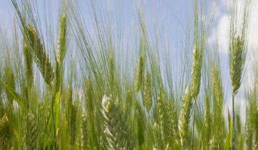 Global agricultural model in bitter balance