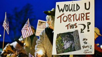 As wolves lose protection, activists keep issue in their crosshairs