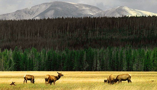 This week in history: Our National Parks face perils on their centennial