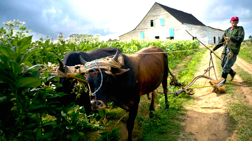 Ecological agriculture in Cuba: Key to sustainability