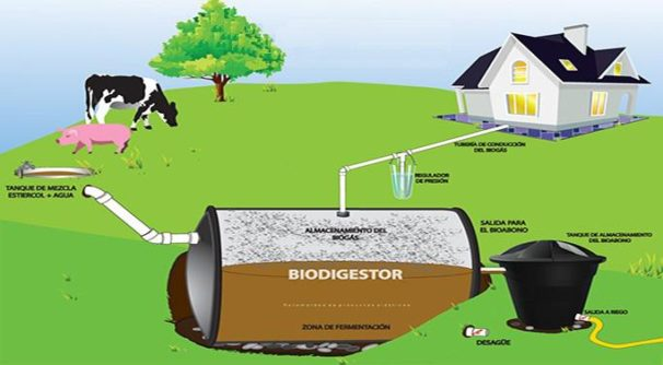 Biodigesters can be used to produce power for homes. | Granma