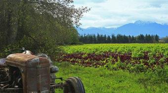 No farms, no food: Washington's Ward-Wheeler Farm preserved