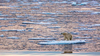 Arctic temperatures soar as sea ice shrinks
