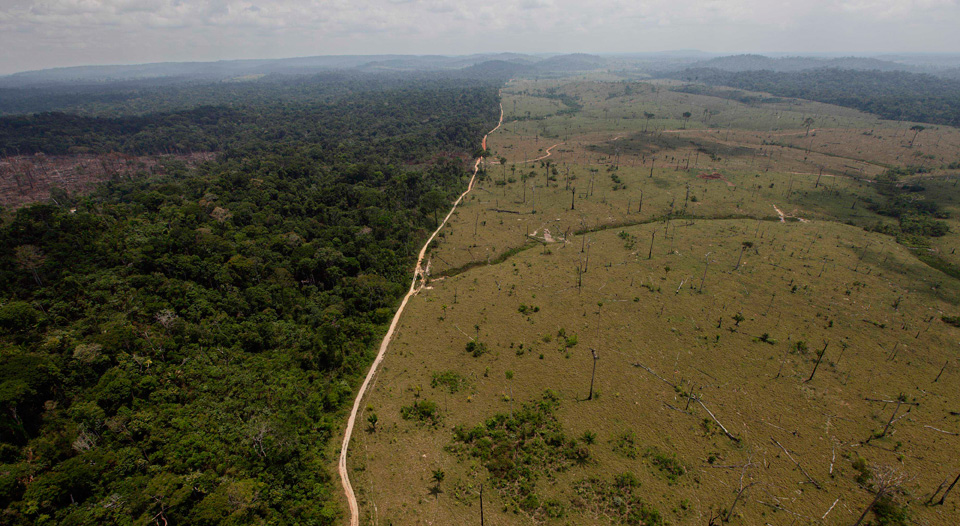 Brazil: Oligarchy versus the Amazon rainforest
