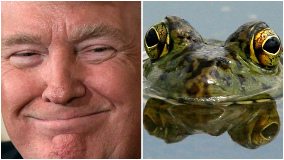 Time to get out of the water before Trump boils us all
