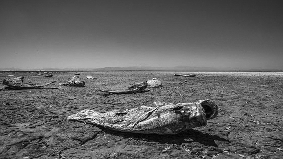 Fighting for breath by the dying Salton Sea