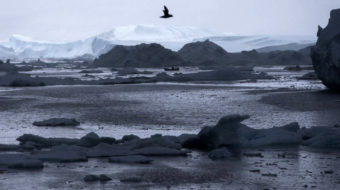 What's behind Greenland's black snow?