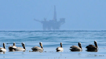 California offshore oil firms rack up nearly 400 violations