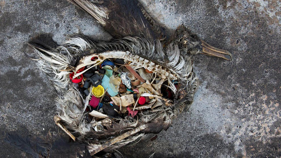 New report on efforts to beat plastic pollution