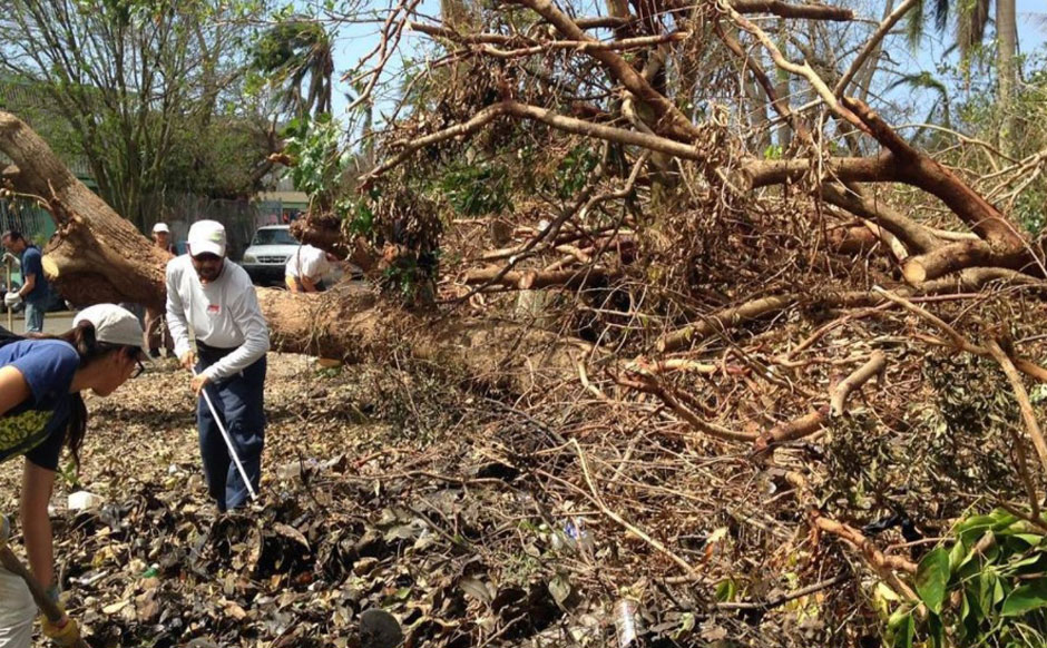 Puerto Rico planting 750,000 trees to defend land from natural disasters