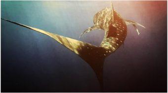 Book Review: Darren Jew's 'Underwater Australia' shows ecosystem under threat