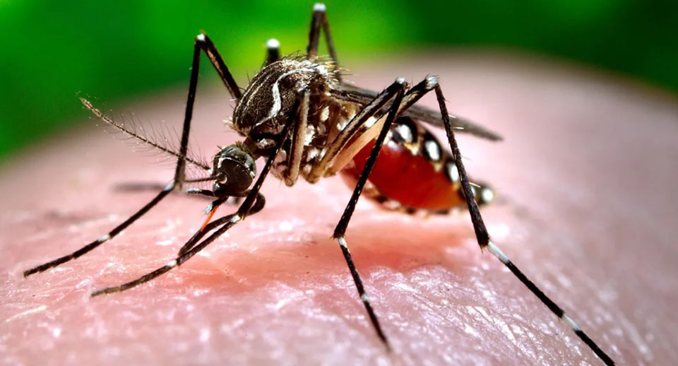 Climate change could spread dengue fever through southeast U.S.
