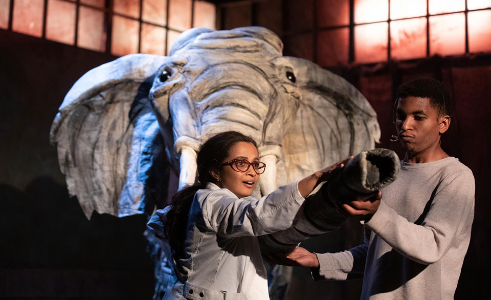 Pachyderm puppetry and human folly in 'Miss Lilly Gets Boned'